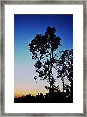 Blue And Gold Sunset Tree Silhouette II Framed Print by Linda Brody