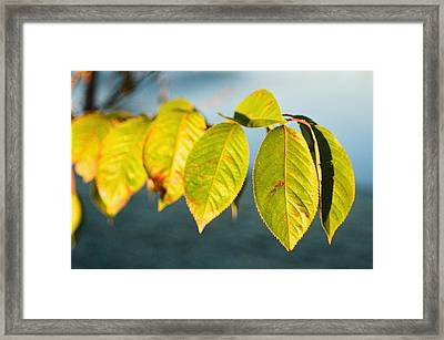 Blue And Green Framed Print by Jonathan Michael Bowman