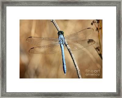 Blue Beauty Framed Print by Carol Groenen