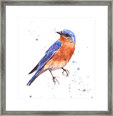 Blue Bird Blue Bird Painting Framed Print by Alison Fennell