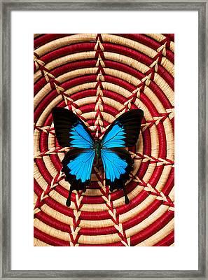 Blue Black Butterfly In Basket Framed Print by Garry Gay