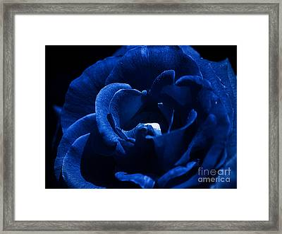 Blue Blue Rose Framed Print by Clayton Bruster