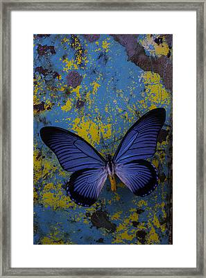 Blue Butterfly On Rusty Wall Framed Print by Garry Gay