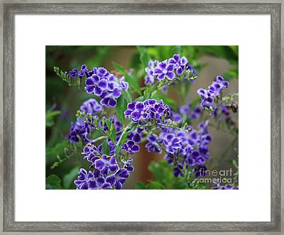 Blue Cottage Flowers Framed Print by Carol Groenen
