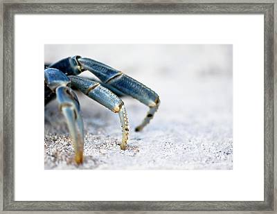 Blue Crab Legs Framed Print by Photograph By  Abi Bell