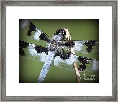 Blue Dragonfly Framed Print by Krista Carofano