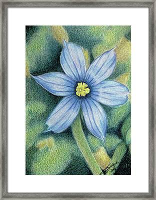 Blue Eyed Grass - 1 Framed Print by Beverly Fuqua