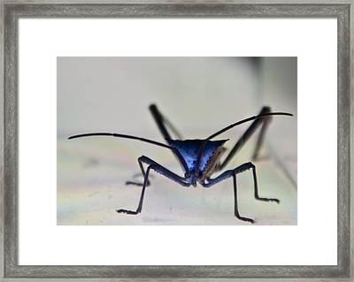 Blue-eyed Monster Framed Print by Douglas Barnett