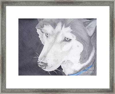 Blue Eyes Framed Print by Sarah Quezada