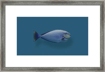 Blue Round Nose Fish Framed Print by Daniel Furon