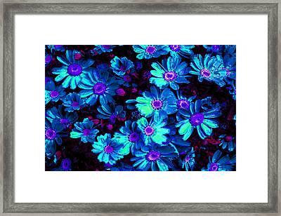 Blue Flower Arrangement Framed Print by Phill Petrovic