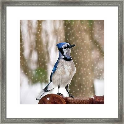 Blue For You Framed Print by Evelina Kremsdorf