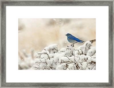 Blue Heaven Framed Print by Sandy Sisti