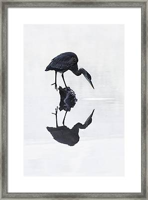 Blue Heron In High Key Framed Print by Mark Kiver