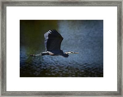 Blue Heron Skies  Framed Print by Saija  Lehtonen