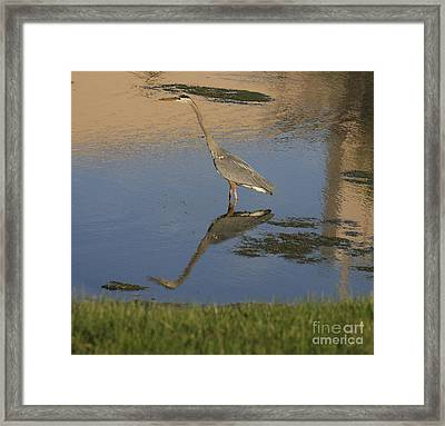 Blue Heron-time To Reflect Framed Print by Robert Pearson