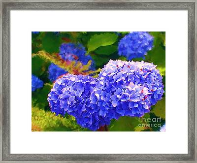Blue Hydrangea Framed Print by Methune Hively