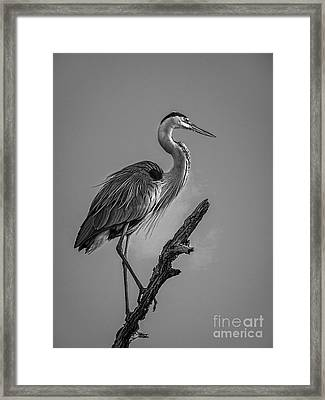 Blue In Black-bw Framed Print by Marvin Spates