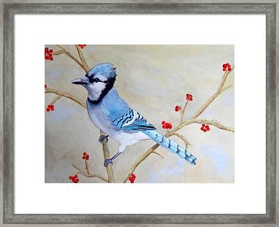 Blue Jay Framed Print by Laurel Best