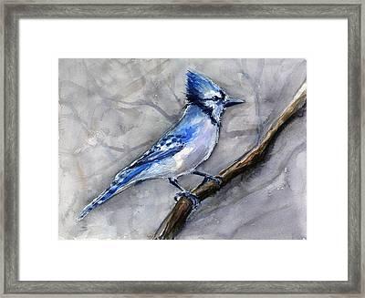 Blue Jay Watercolor Framed Print by Olga Shvartsur