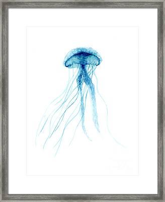 Blue Jellyfish Minimalist Painting Framed Print by Joanna Szmerdt