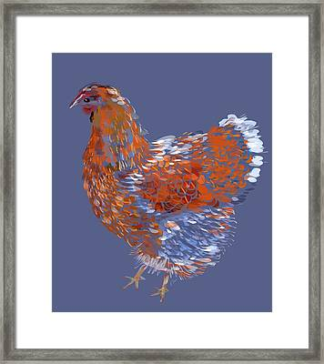 Blue-laced Red Wyandotte Framed Print by Jennifer Buerkle
