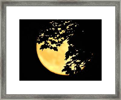Blue Moon Rising Behind Red Maple Framed Print by Jamie K Reaser