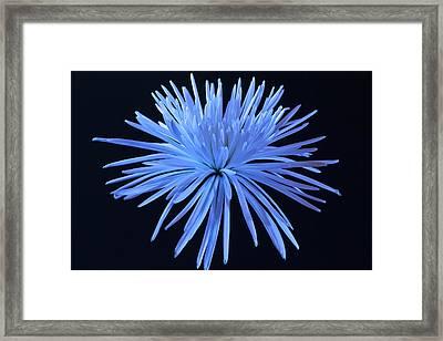 Blue Mum Framed Print by Jon Glaser