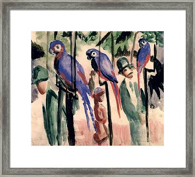 Blue Parrots Framed Print by August Macke