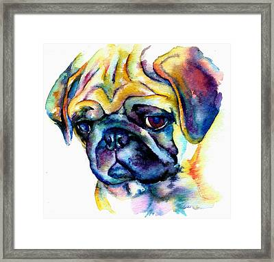 Blue Pug Framed Print by Christy  Freeman