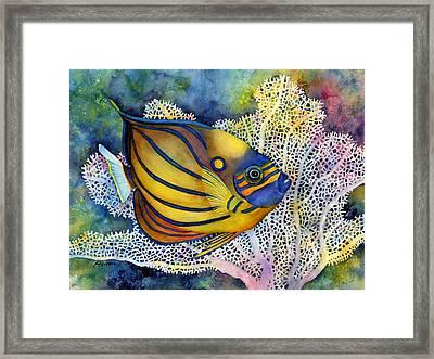 Blue Ring Angelfish Framed Print by Hailey E Herrera
