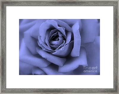 Blue Rose Abstract Framed Print by Carol Groenen
