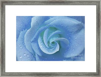 Blue Rose Framed Print by Julia Hiebaum