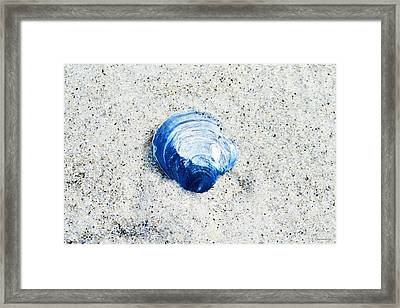 Blue Seashell By Sharon Cummings Framed Print by Sharon Cummings