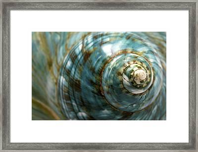 Blue Seashell Framed Print by Fabrizio Troiani
