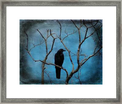 Blue Sky Blackbird Framed Print by Gothicrow Images