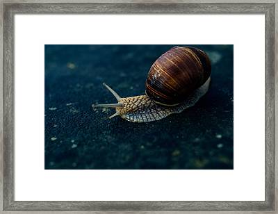 Blue Snail Framed Print by Pati Photography