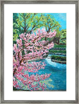 Blue Spring Framed Print by Carolyn Donnell