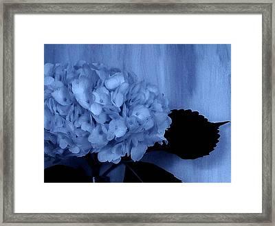 Blue Tint Hydrangea Framed Print by Marsha Heiken