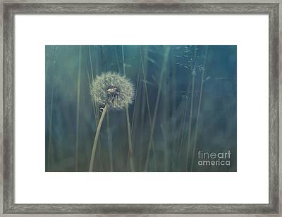 Blue Tinted Framed Print by Priska Wettstein