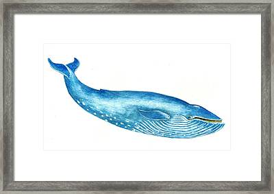 Blue Whale Framed Print by Michael Vigliotti
