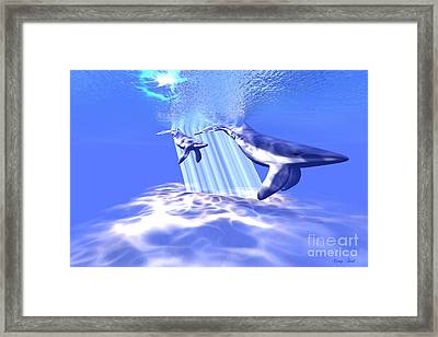 Blue Whales Framed Print by Corey Ford