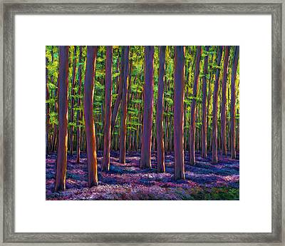 Bluebells And Forest Framed Print by Johnathan Harris