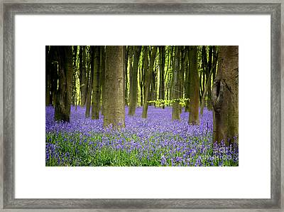 Bluebells Framed Print by Jane Rix