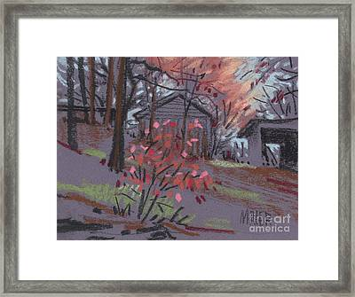 Blueberry Bush In Fall Framed Print by Donald Maier