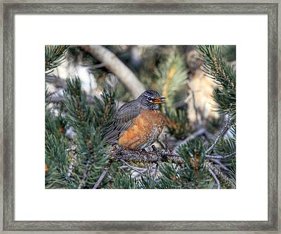 Blueberry Delight Framed Print by Donna Kennedy