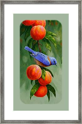 Bluebird And Peach Tree Iphone Case Framed Print by Crista Forest