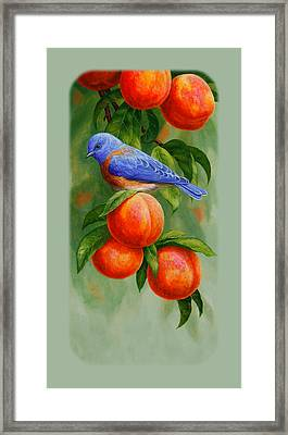 Bluebird And Peaches Iphone Case Framed Print by Crista Forest