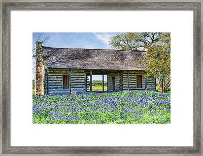 Bluebonnets And Log Cabin Framed Print by Tod and Cynthia Grubbs