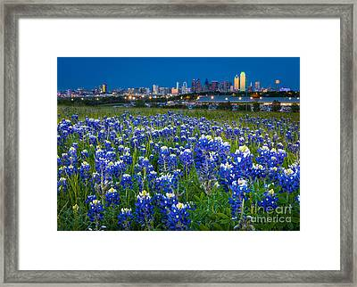 Bluebonnets In Dallas Framed Print by Inge Johnsson